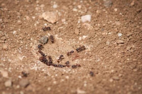 antss